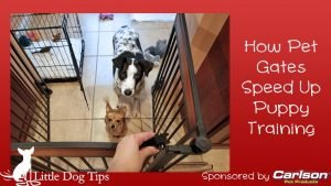 Pet Gates Speed Up Puppy Training by preventing accidents and destructive chewing while you establish good habits.