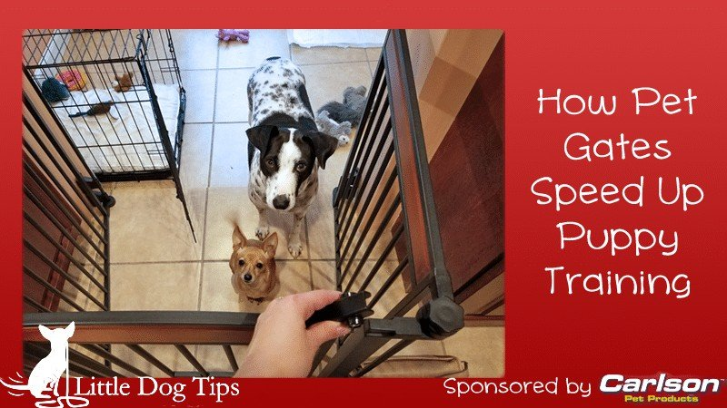 How Pet Gates Speed Up Puppy Training #sponsored by Carlson Pet