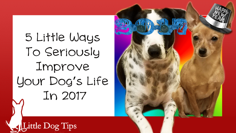 5 Little Ways To Seriously Improve Your Dog's Life in 2017