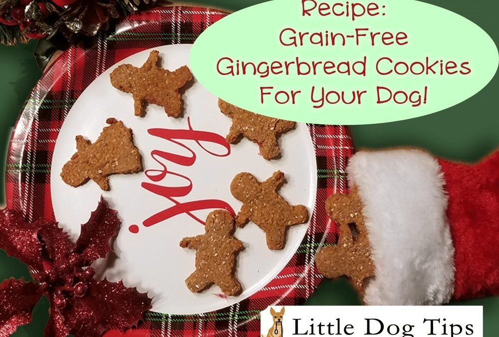 Recipe: Grain Free Gingerbread Cookies For Dogs!