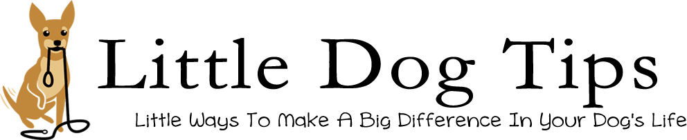 Little Dog Tips