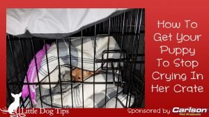 How To Get Your Puppy To Stop Crying In Her Crate #sponsored by Carlson Pet - #positivetraining