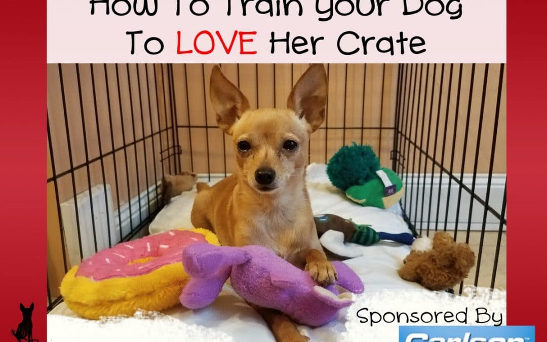 How To Train Your Dog To LOVE Her Crate #sponsored by Carlson Pet