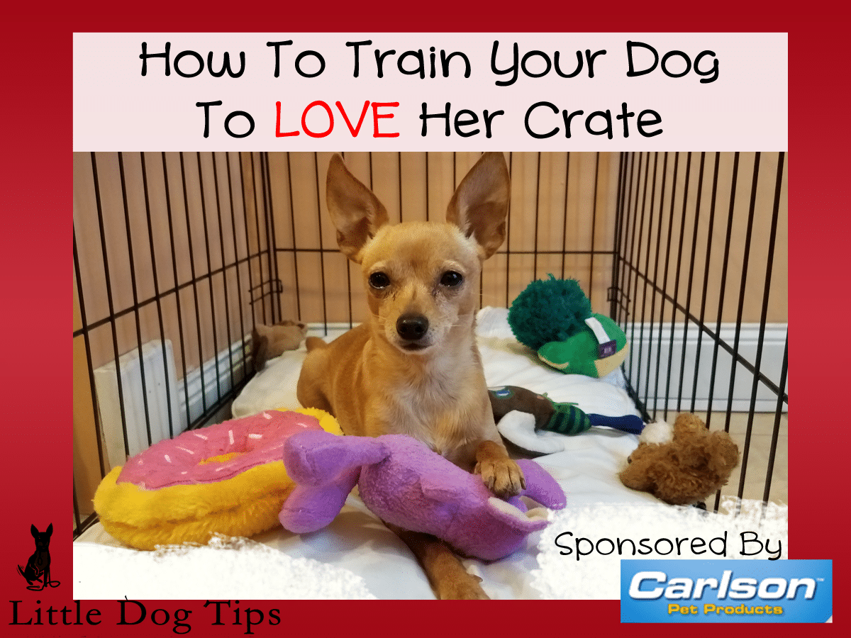 How To Train Your Dog Love Her Crate Sponsored By Carlson Pet