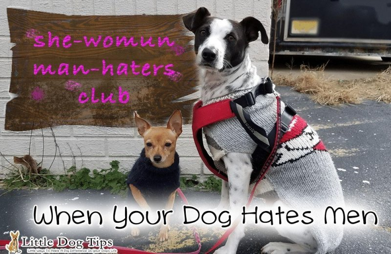 How to use #positivetraining when your dog is afraid of men, and won't stop barking.