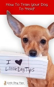 How to train your dog to hold an object, a toy, a sign... anything! #positivetraining #dogtricks