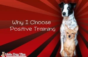 Why I Choose #positivetraining for my dogs