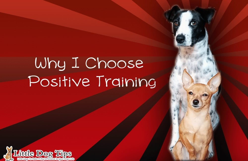 Why I Choose Positive Training