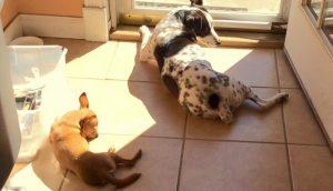 Lazy Inconsistent Positive Dog Training