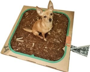 Bark Potty #ad - mess-free indoor potty system!