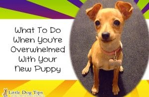 What To Do When You're Overwhelmed With Your New #Puppy