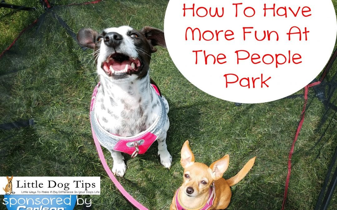 "How To Enjoy The ""People"" Park With Your Dog – #sponsored by Carlson Pet"