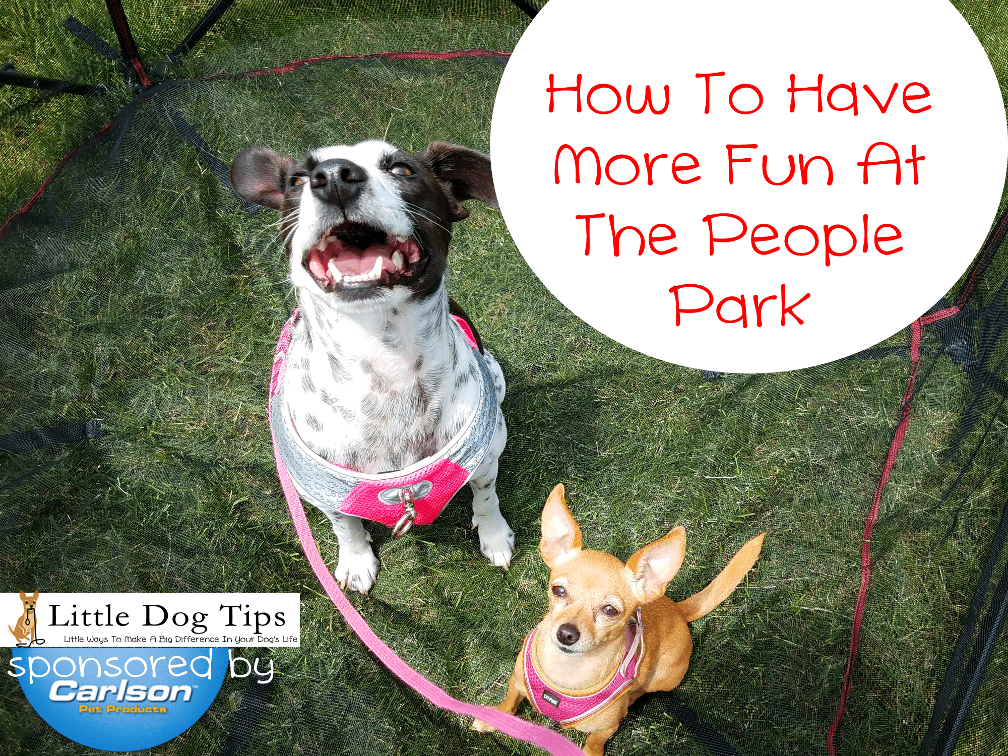 How To Enjoy The People Park With Dogs