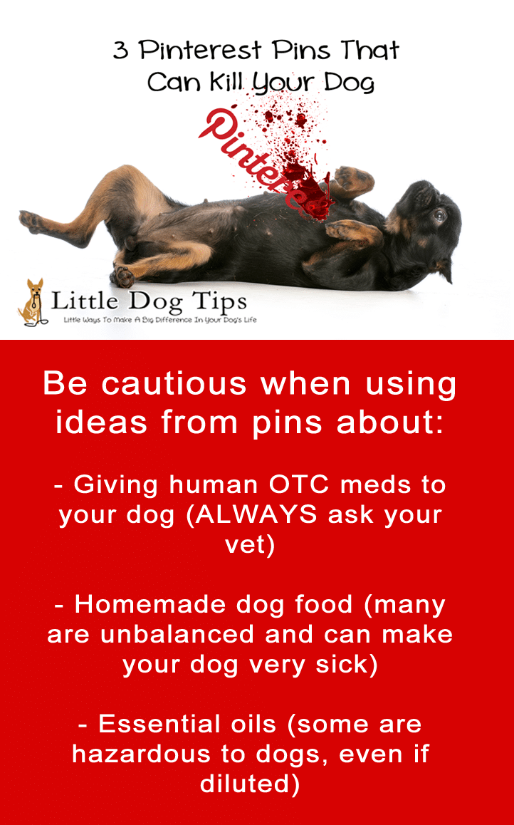 Some Pinterest ideas are not safe for dogs, even if the information is displayed in an attractive way. Always do your research and talk to your vet!