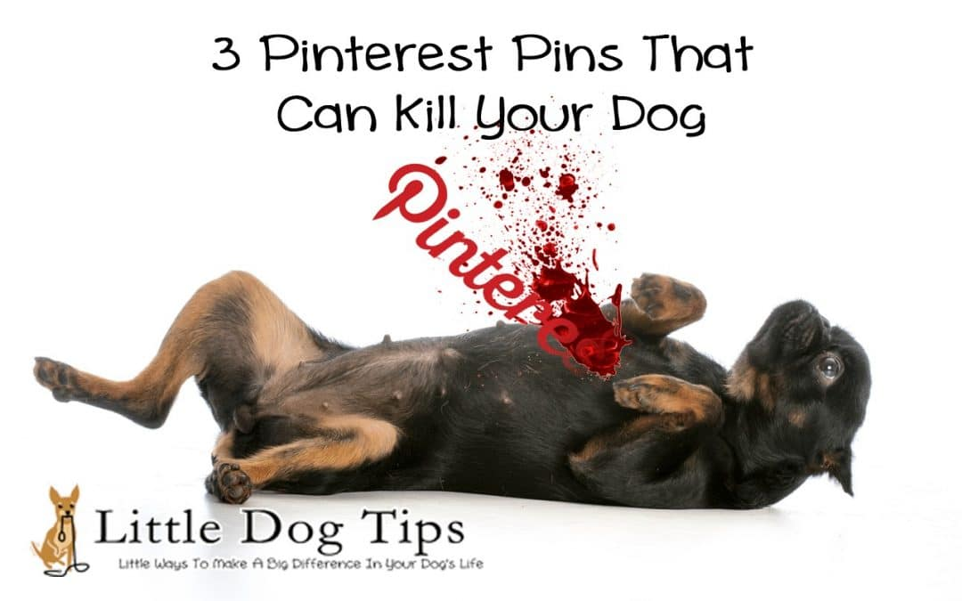 3 Pinterest Pins That Can Kill Your Dog