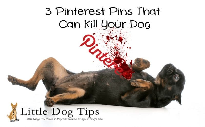3 Pinterest Pins That Can Kill Your #Dog