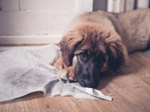 Is it time to take away the puppy pads? Here's how you'll know: