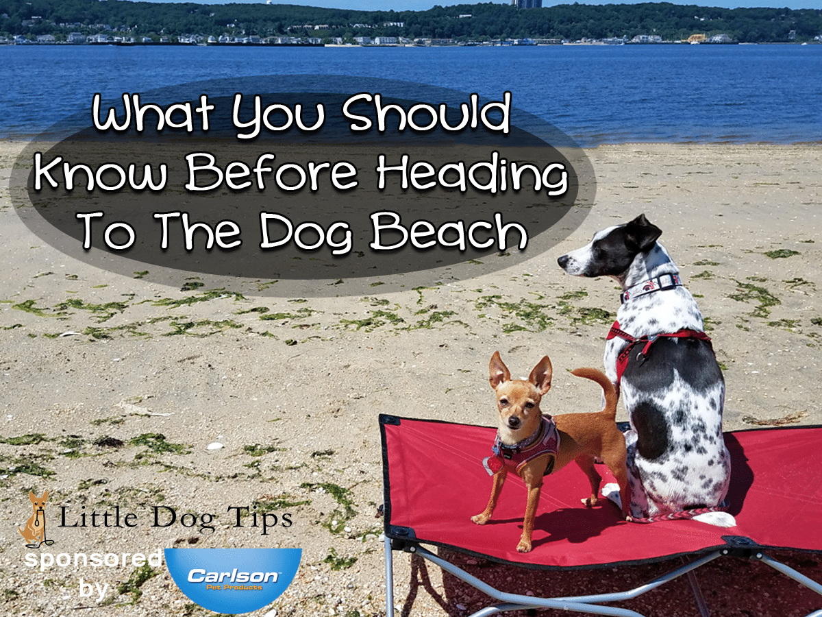 What You Should Know Before Heading To The Dog Beach- #sponsored by Carlson Pet