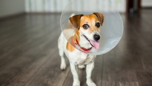 To Spay or Not To Spay? Know the risks and benefits before you decide.