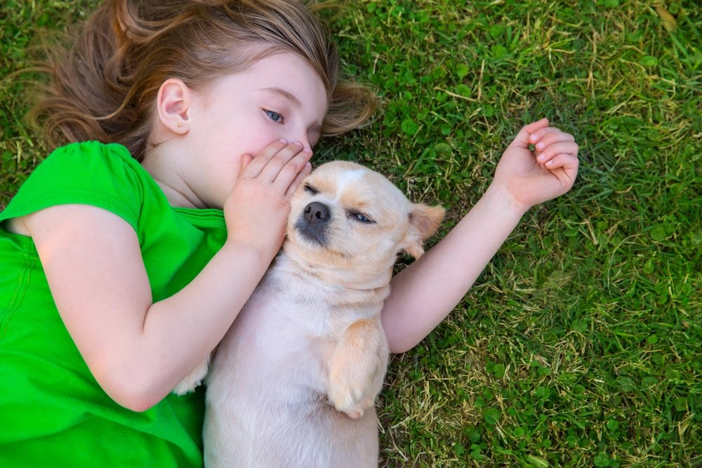 Why Are Dogs So Heckin' Friendly? New Research Offers Clues