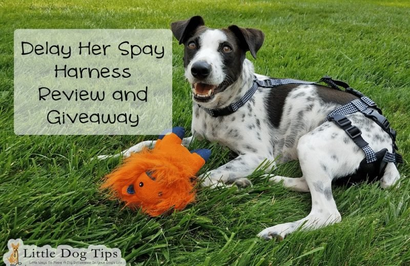 Delay Her Spay #Sponsored Review and Giveaway