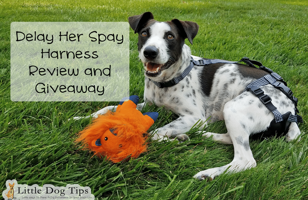 Delay Her Spay Heat Diaper/Breeding Prevention Harness Review/Giveaway #sponsored