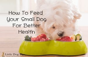 How To Feed Your #SmallDog For Better Health