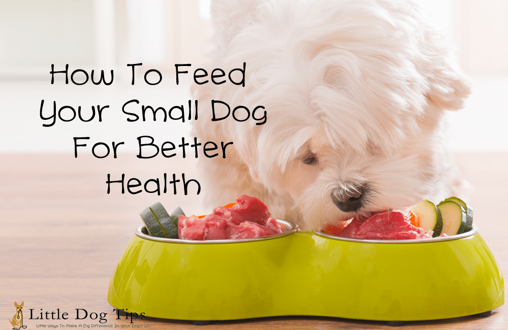 How to Feed Your Small Dog for Better Health