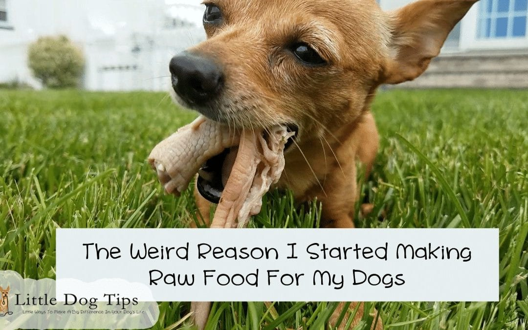 I Quit Kibble And Started Feeding My Dogs A Homemade Raw Diet For A Really Weird Reason
