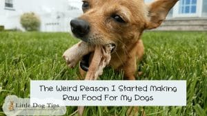 The Weird Reason I Quit Kibble And Started Making My Dogs A Raw Diet