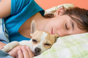 How to safely sleep with your small dog