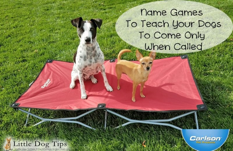 Teach your dogs to wait for their name to be called