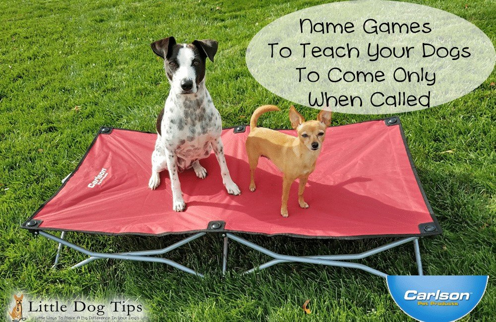 Teach Your Dogs To Wait For Their Names To Be Called – Portable Cot Giveaway from Carlson Pet