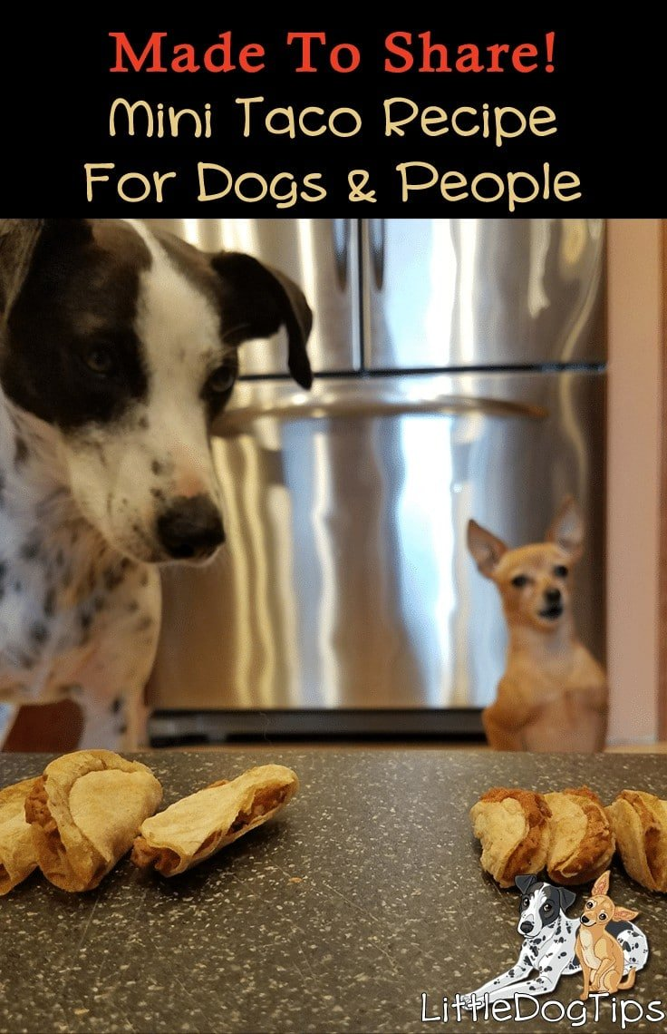 Mini Taco Treat Recipe For Dogs! Cinco De Mayo inspired
