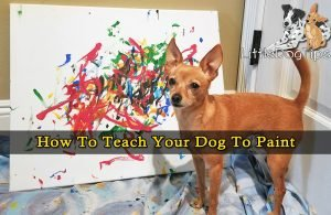How To Teach Your Dog To Paint chihuahua in front of her artwork