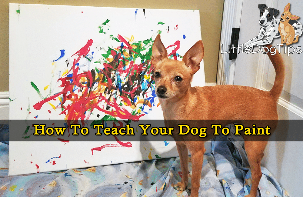 How To Teach Your Dog To Paint