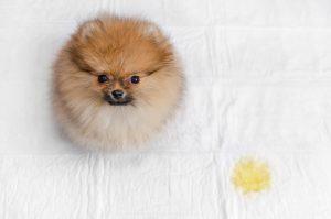 Eco Friendly Alternatives To Your Dog's Potty Pads
