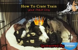 How To Crate Train Your Adult Dog #positivetraining