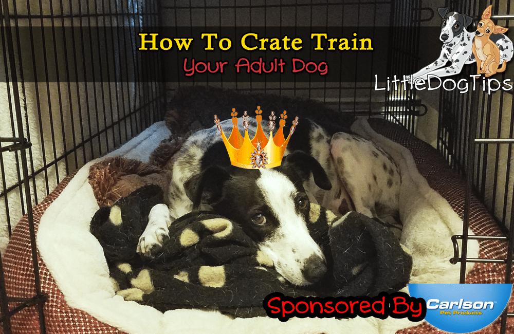 How To Crate Train Your Adult Dog