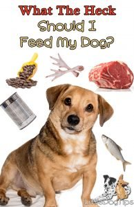 What The Heck Should I Feed My Dog? #dognutrition #dogfood #crockpotdogfood #rawfeeding