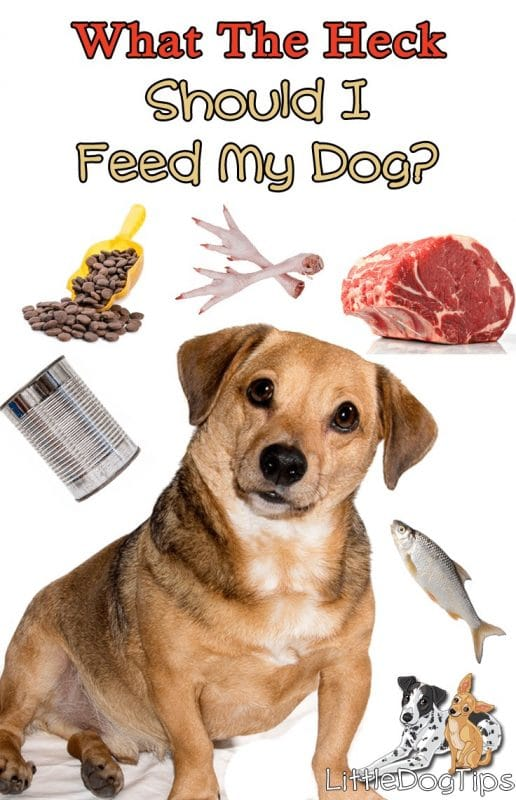 What The Heck Should I Feed My Dog? #dognutrition #dogfood #crockpotdogfood #rawfeeding
