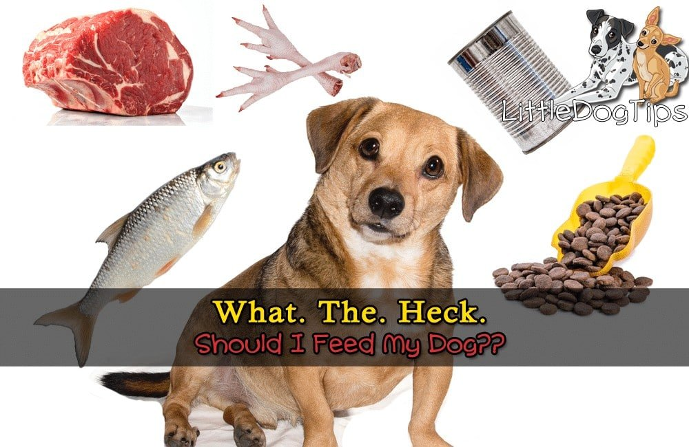 What To Feed Dog Benefits Of Raw, Kibble