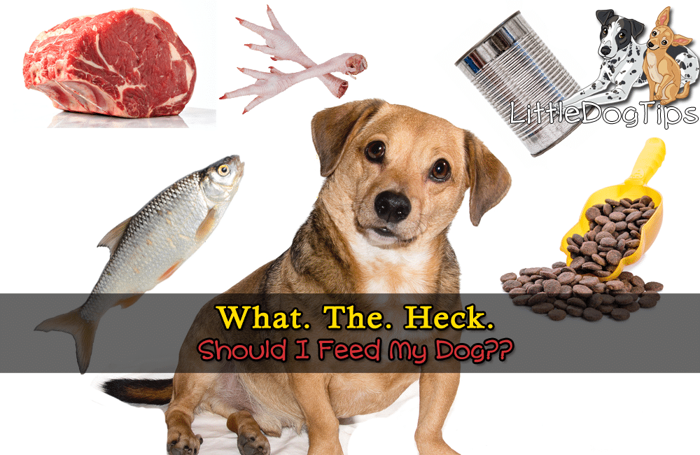 What. The Heck. Should I Feed My Dog?