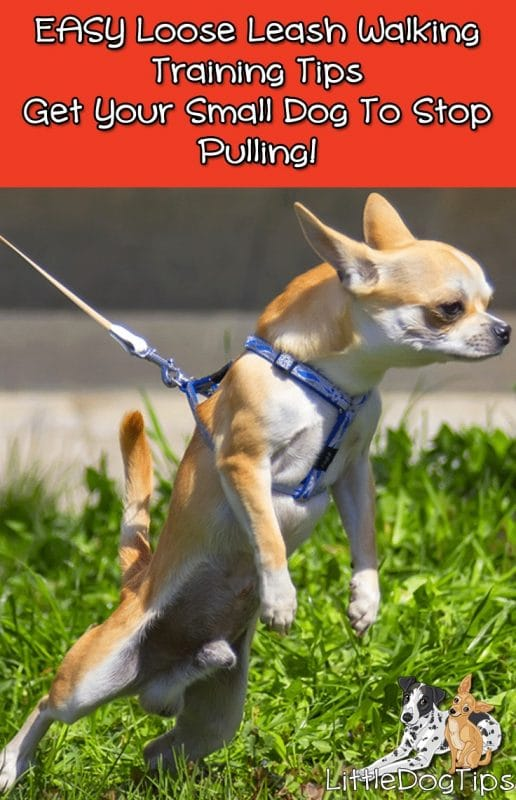 Loose Leash Walking - Easy Positive Training Tips For Small Dogs