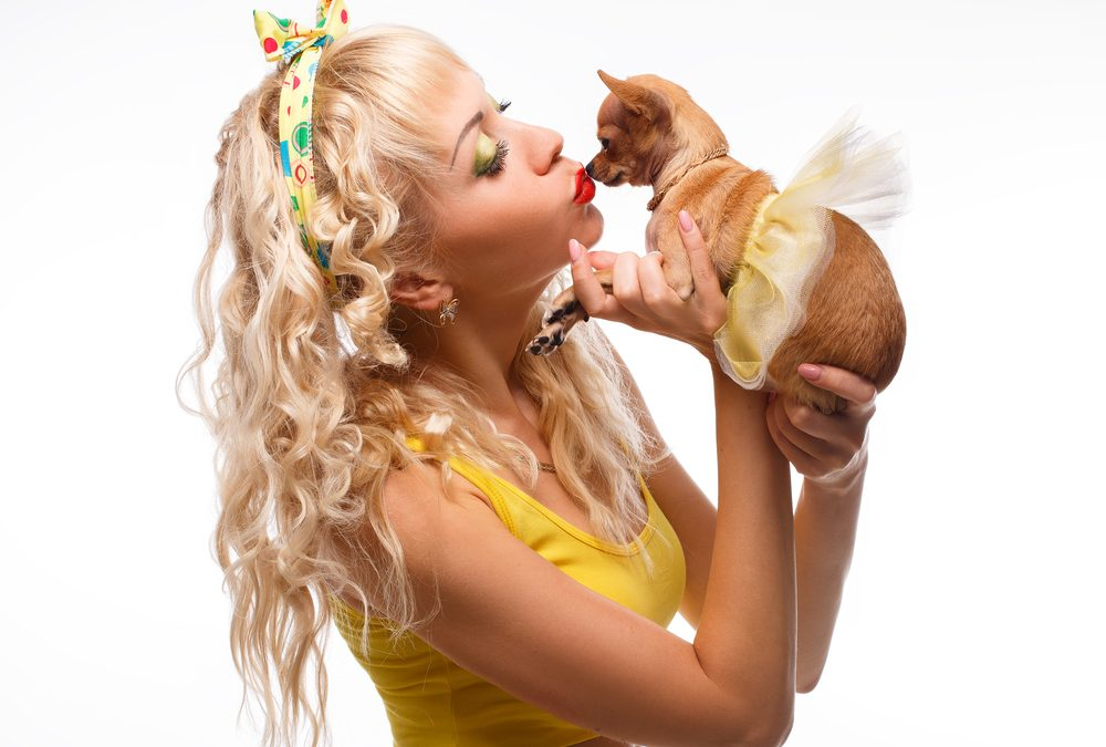 Why Your Chihuahua Has Bad Breath