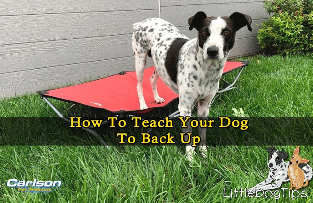 How To Teach Your Dog To Back Up With The Portable Pet Cot From Carlson Pet