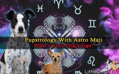 Pupstrology With Astromaji – Your Dog's Personality Profile Based On Their Zodiac Sign