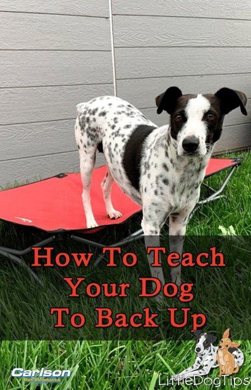 How To Teach Your Dog The Back Up Cue With #Positivetraining #Dogtricks