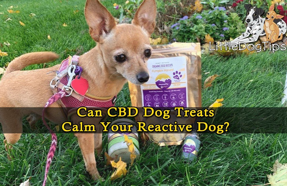Can CBD Treats Help My Reactive Dog?