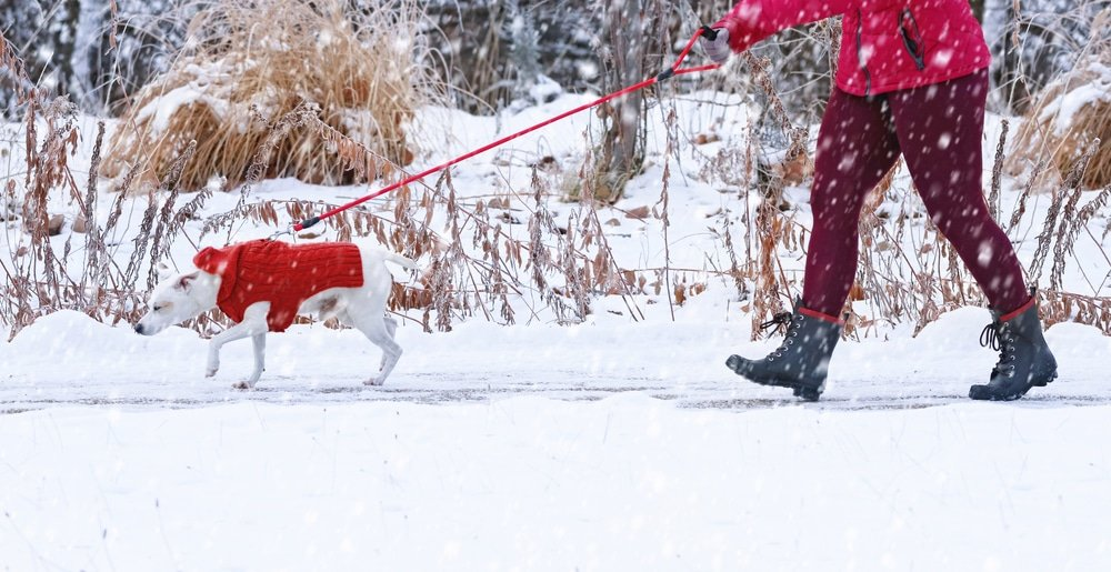 How To Potty Train A Small Dog In The Winter
